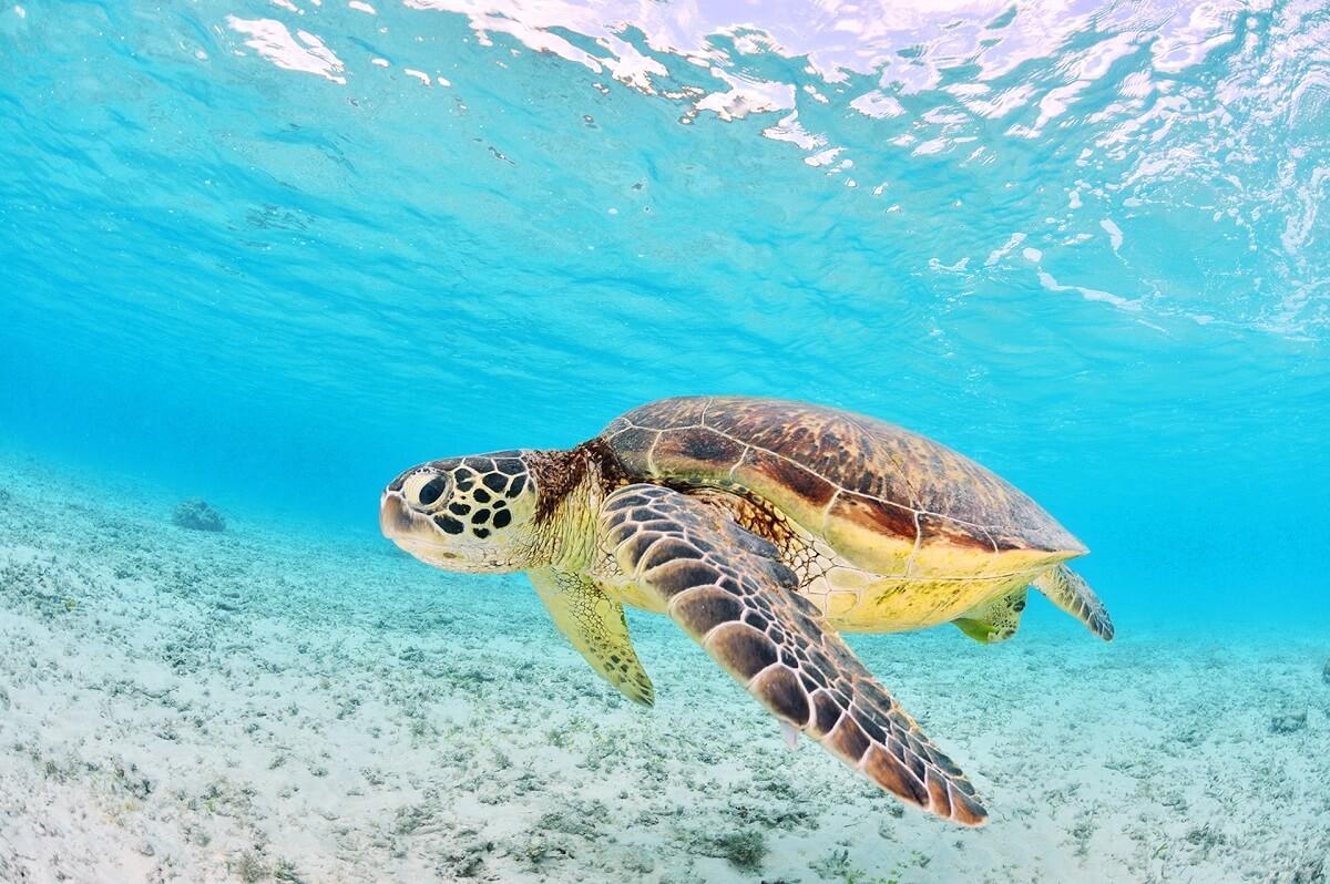 Marathonisi-Turtle-Island-Zakynthos-Cruises-3
