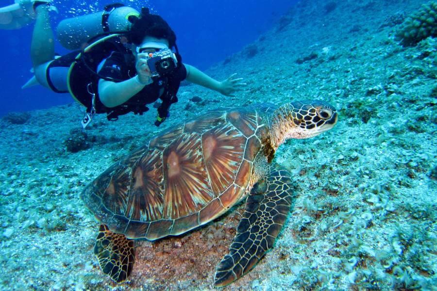 Diving-snorkeling-Zakynthos-Cruises-2